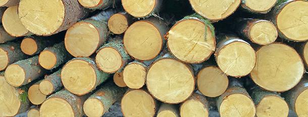 Расчет кубатуры леса. Онлайн-кубатоурник